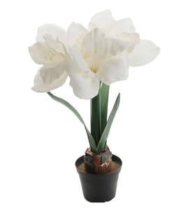Bilde av Amaryllis i potte (hvit 45 cm)